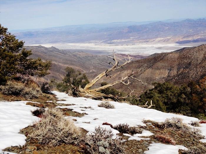 Wildrose Peak Summit.  Elev: 11,043′