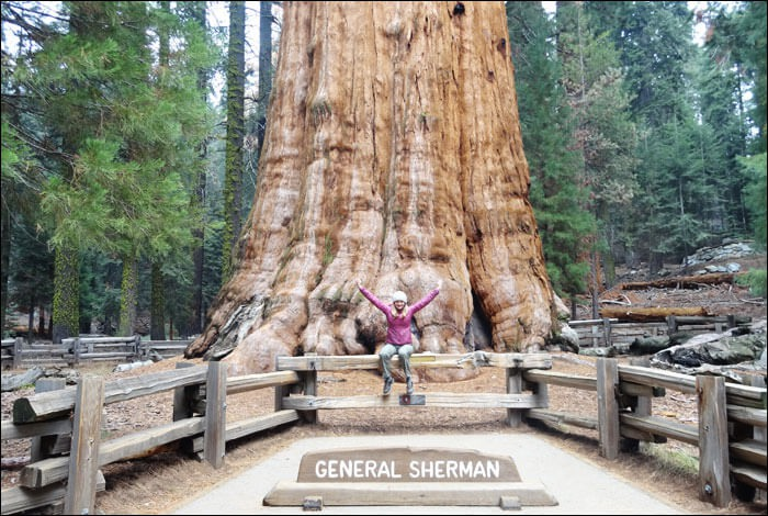 The General Grant Tree - Sequoia & Kings Canyon National Park